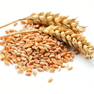 Feed wheat for sale